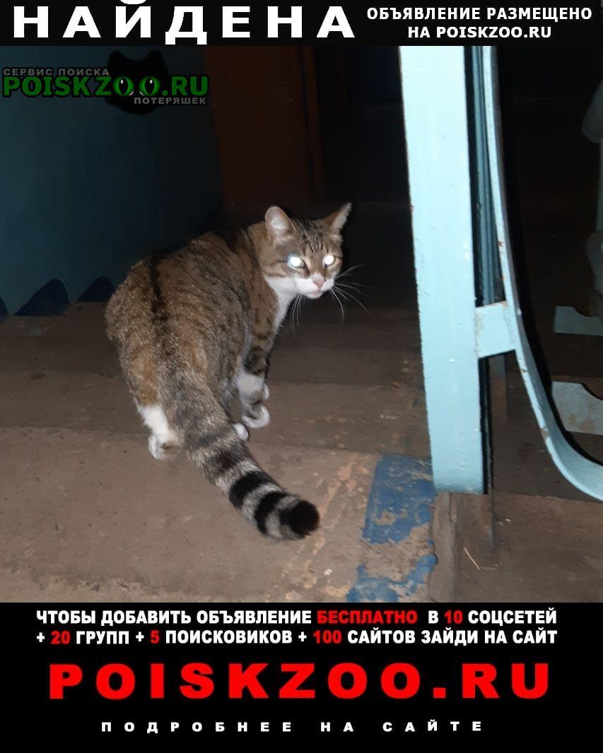 Найдена кошка кот или Самара