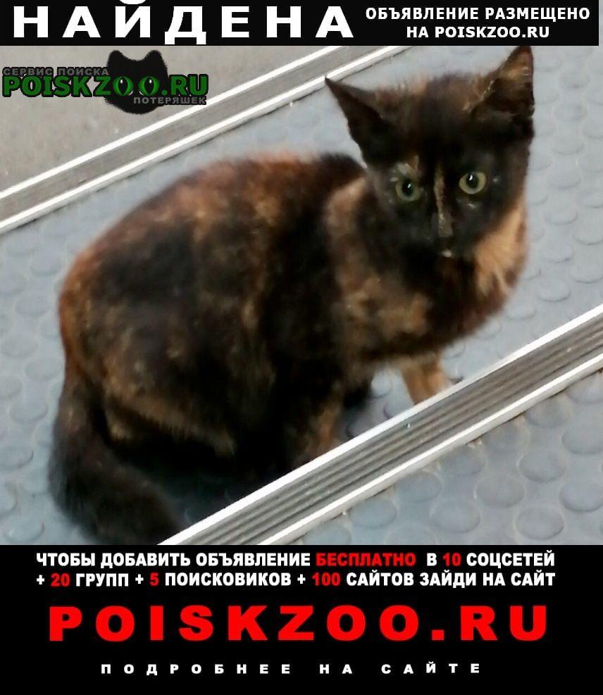 Найдена кошка черепаховый окрас Москва