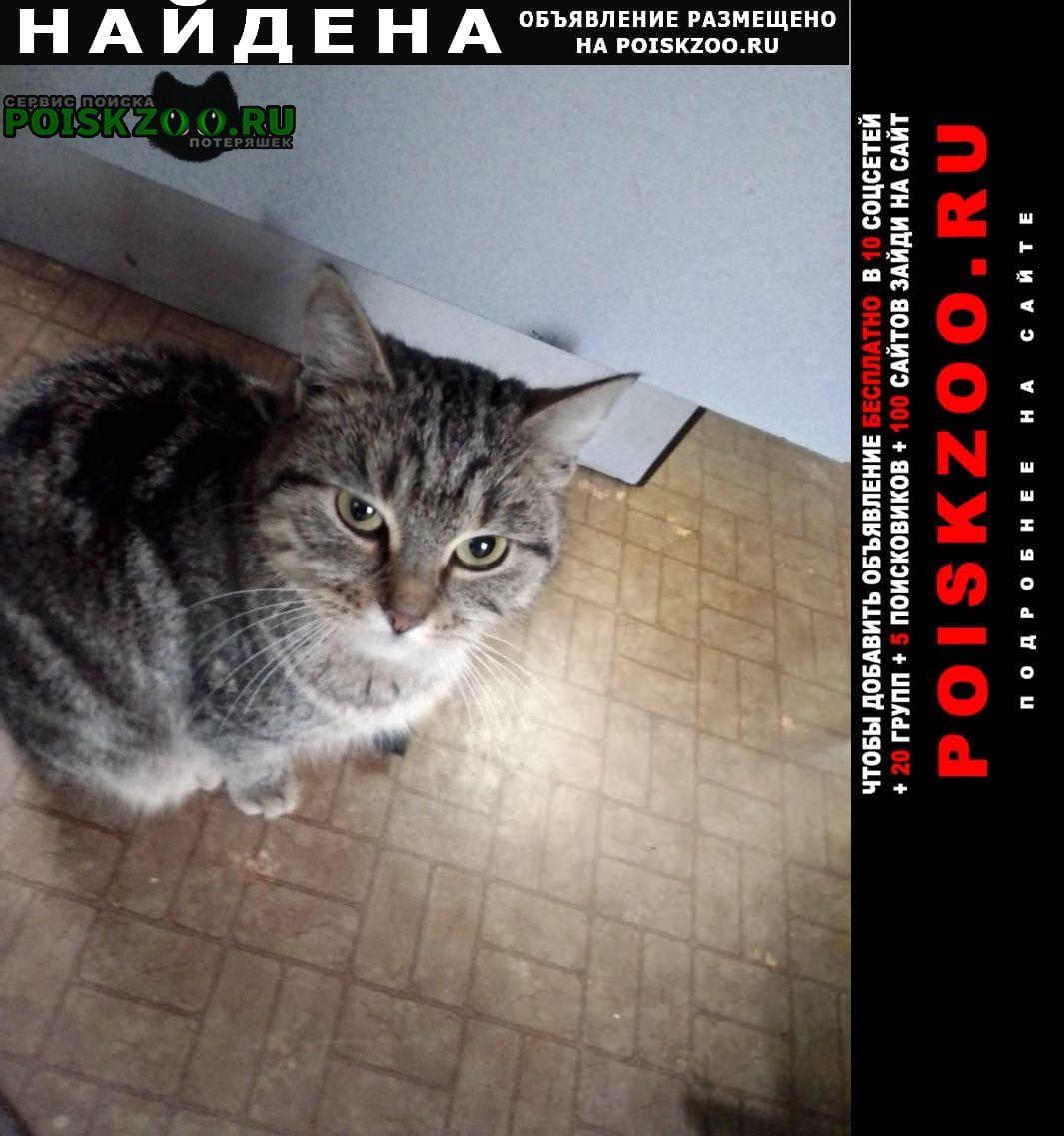 Найдена кошка ручная Ставрополь