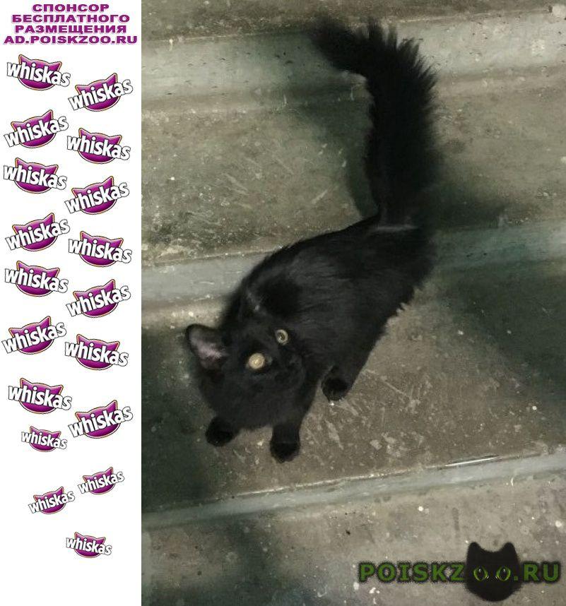 Найден кот домашний г.Москва