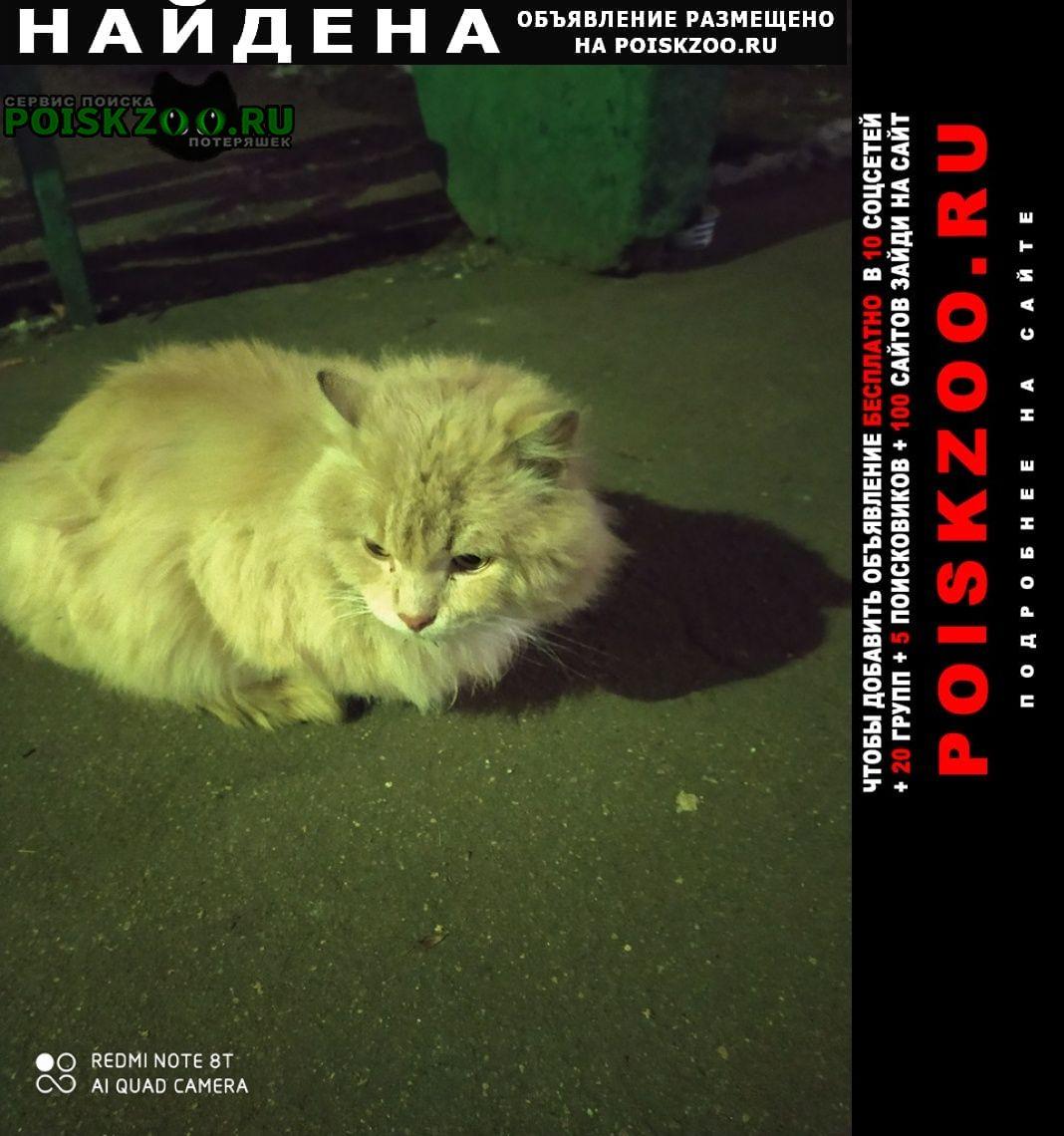 Найдена кошка -кот Москва
