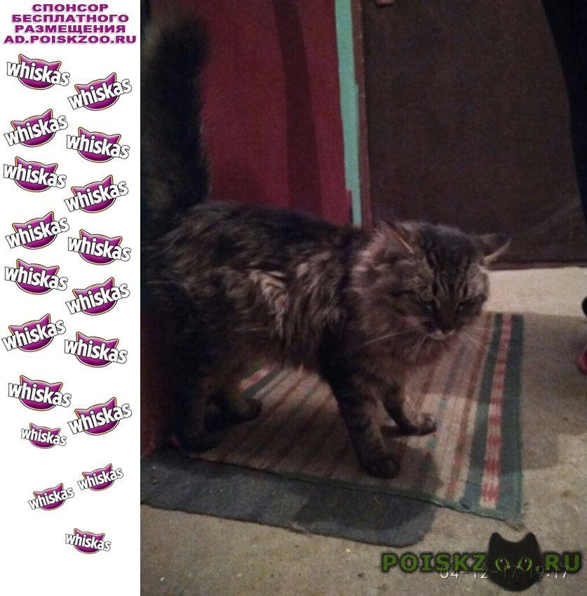 Найден кот серый пушистый, г.Жуковский