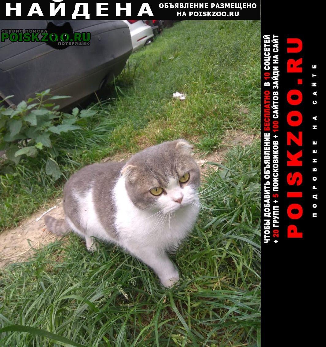 Найдена кошка (кот) Звенигород