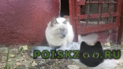 Найдена кошка г.Подольск