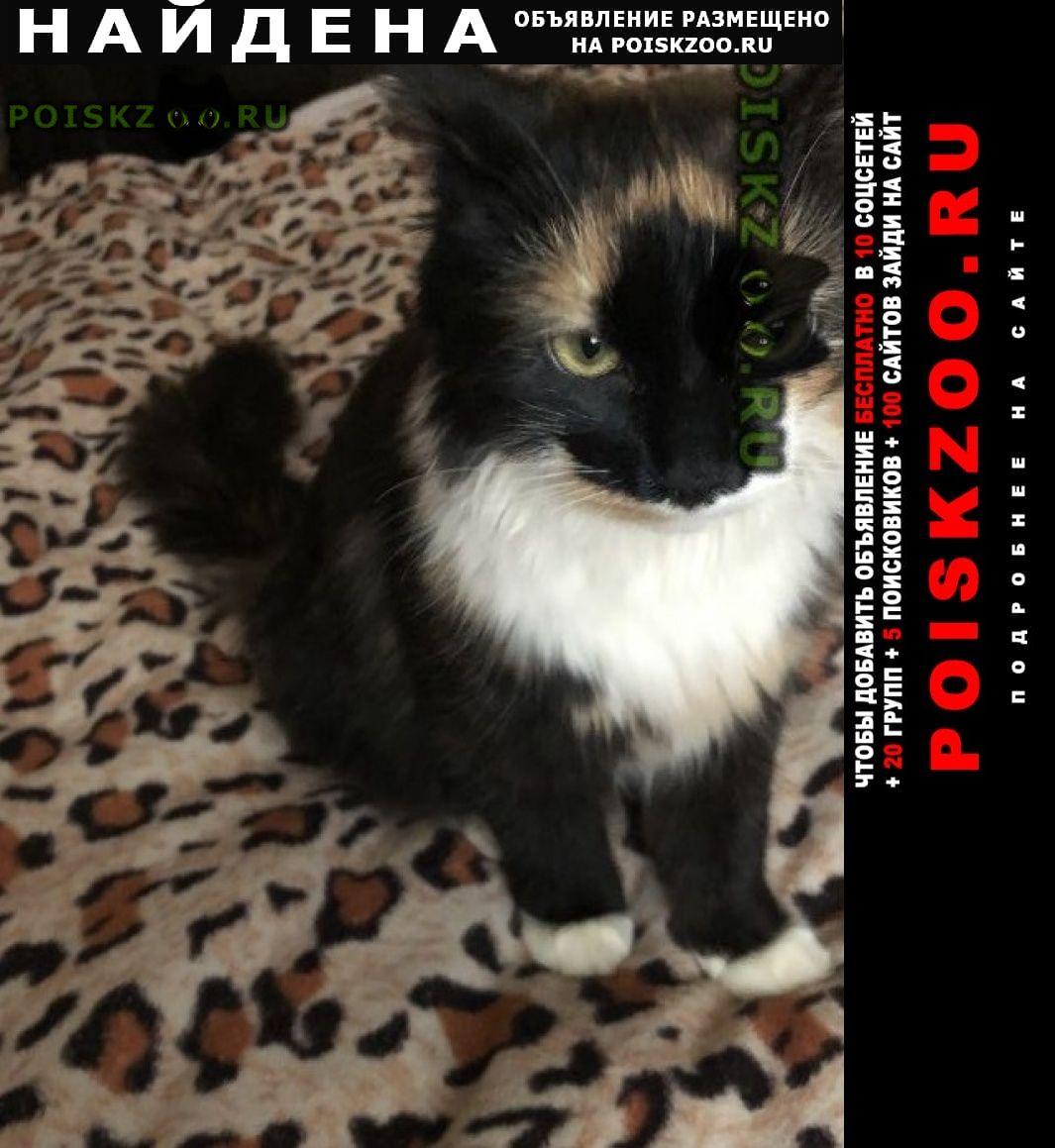 Найдена кошка молодая трехцветная кошечка. Санкт-Петербург