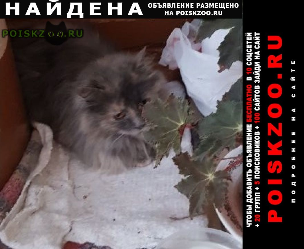 Найдена кошка домашняя кошечка Королев