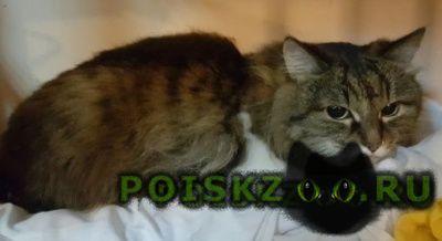 Найдена кошка г.Волжский (Волгоградская обл.)