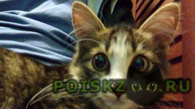 Найдена кошка молодоя кошечка - месяцев г.Москва