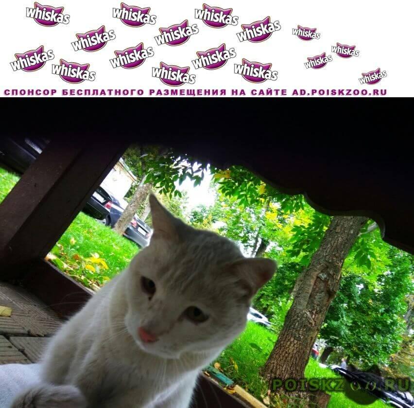 Найден кот г.Внуково