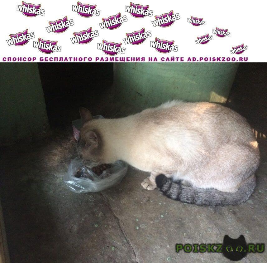 Найдена кошка г.Щербинка
