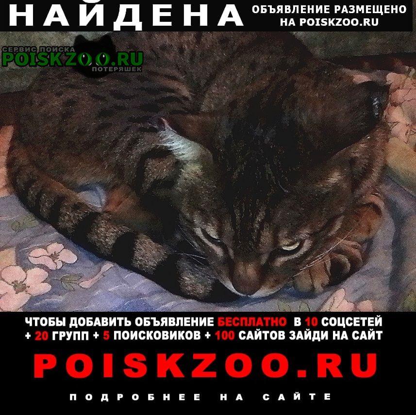 Найдена кошка в рябково по черняховского возле садика. Курган