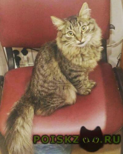 Найдена кошка г.Челябинск