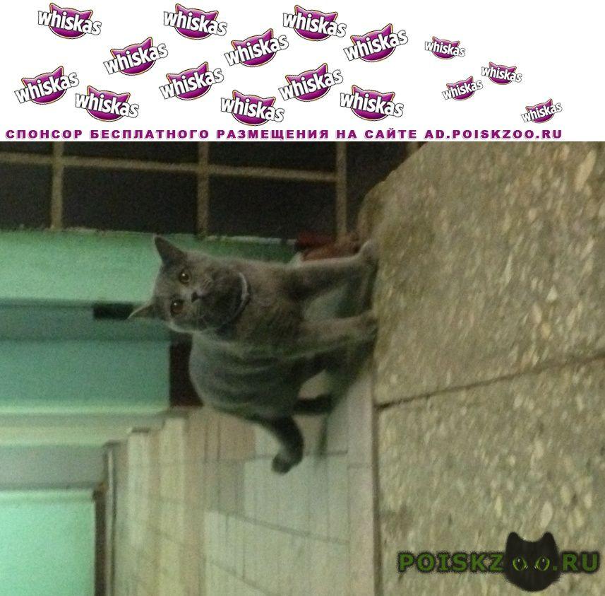 Найдена кошка домашняя серая с ошейником г.Москва