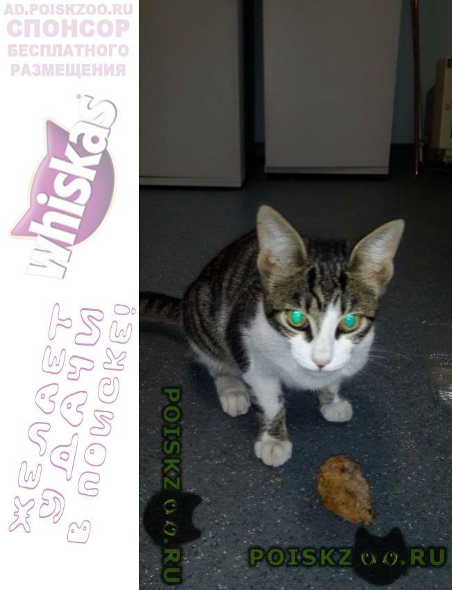 Найден кот академгородок г.Новосибирск
