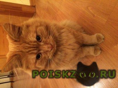 Найден кот рыжий г.Казань