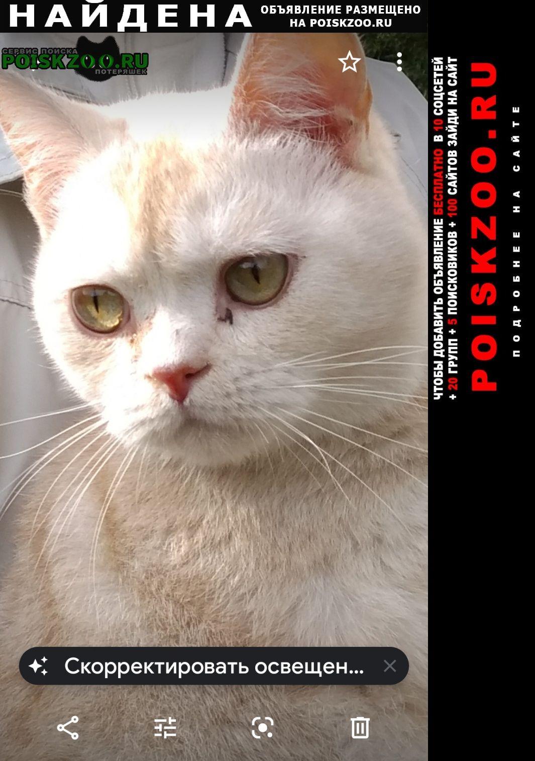 Найдена кошка кот. Санкт-Петербург