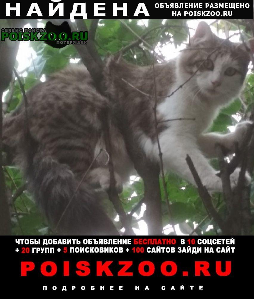 Найден кот. совершенно ручной. Владикавказ