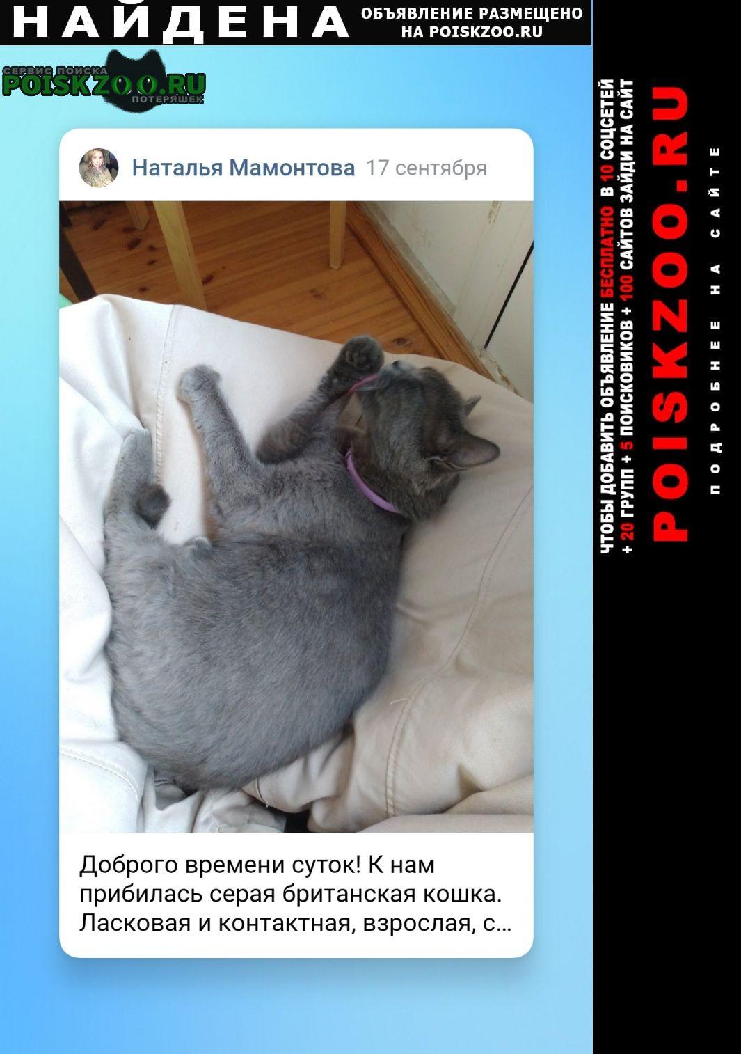 Найдена кошка британская в сиреневом оше Нижний Новгород