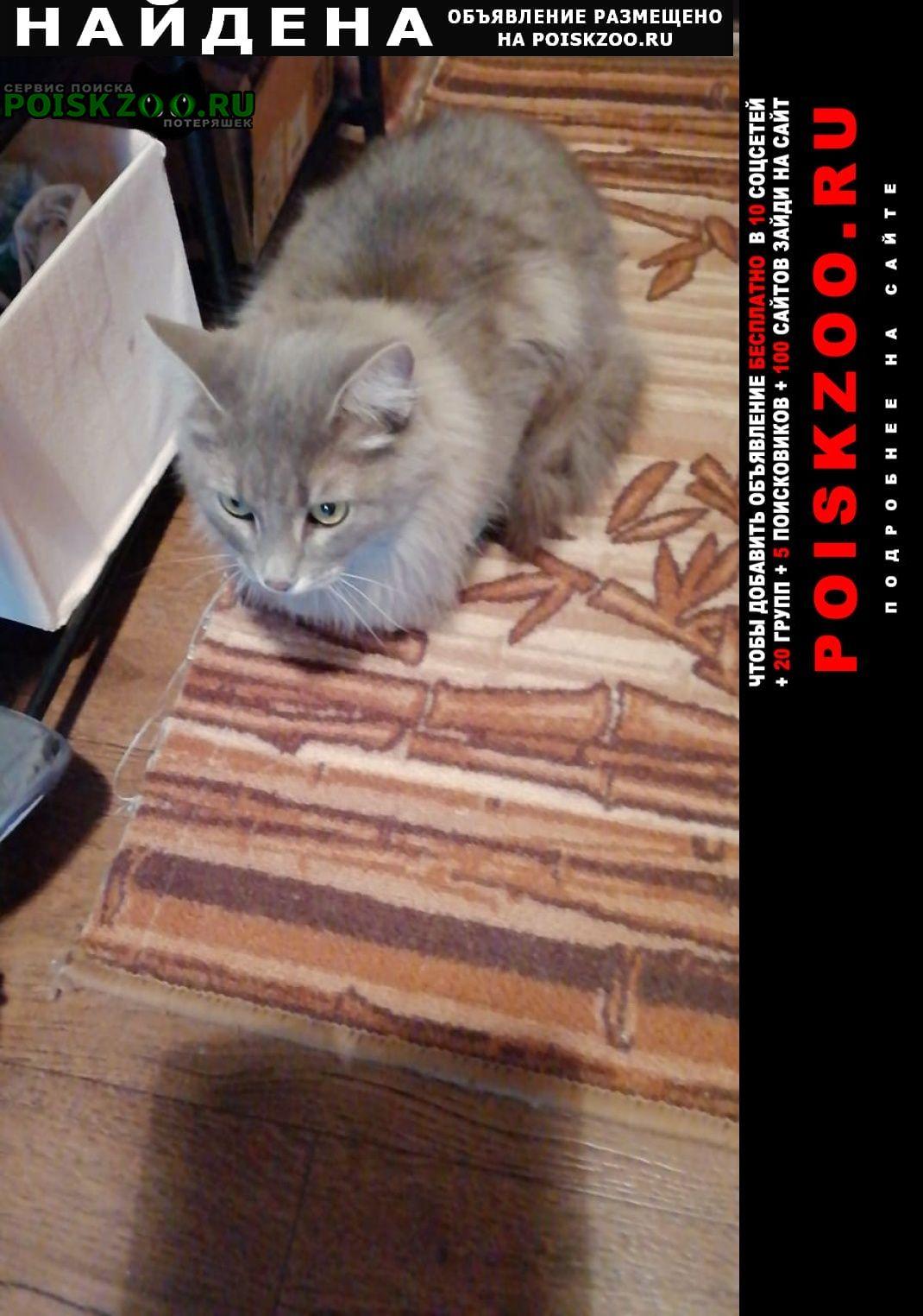 Найдена кошка прима парк, щербинка Москва