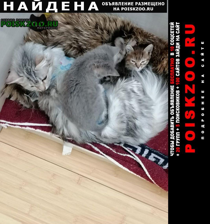 Найдена кошка ищем заботливых хозяев Ступино