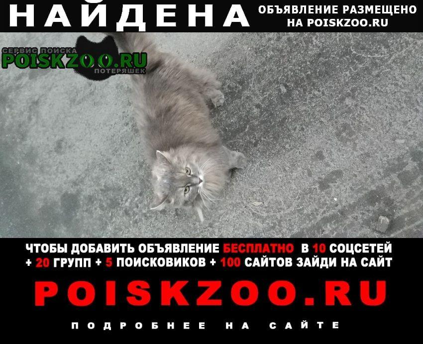 Найдена кошка неделю ходит около подъезд Москва