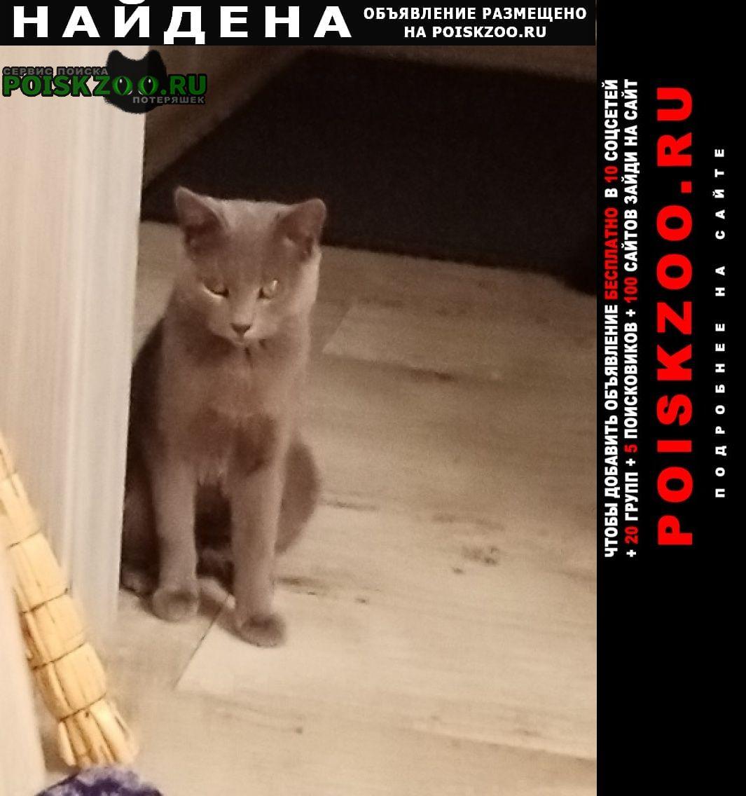 Найдена кошка нашли кошечку Челябинск