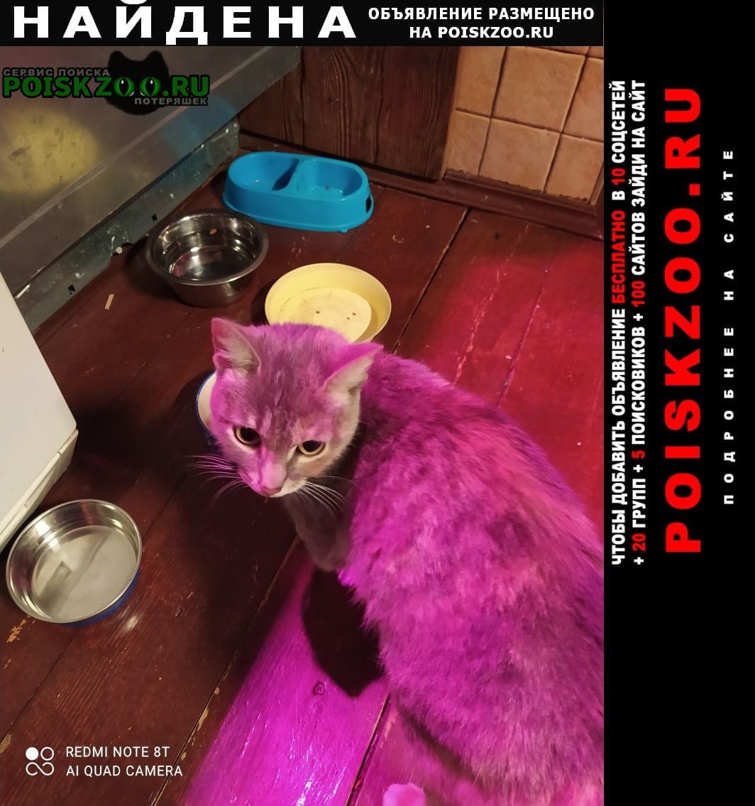 Найдена кошка Химки