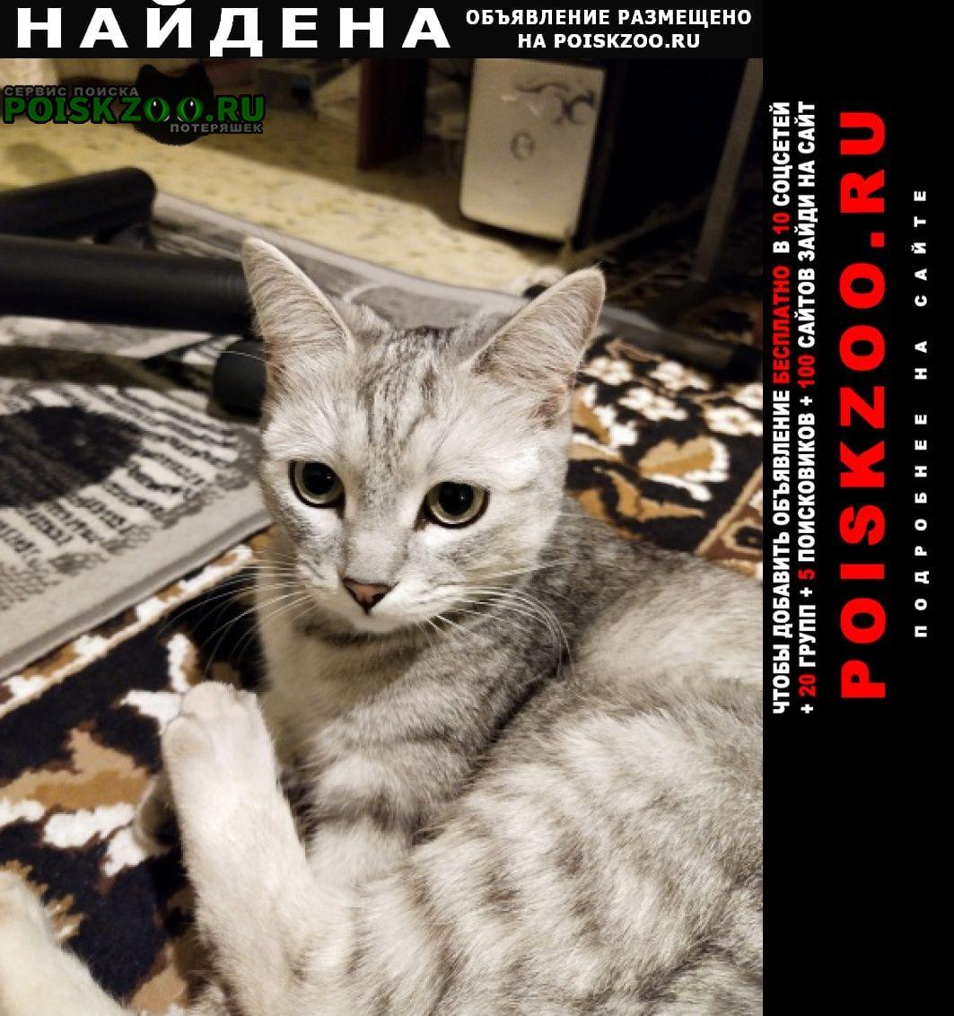 Найдена кошка светло-серая Волгоград