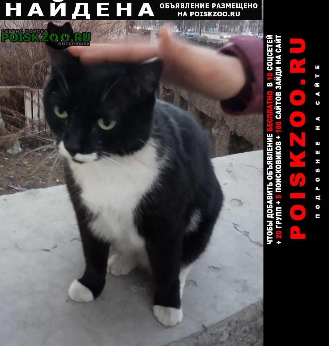 Найдена кошка уже 2-ой год сидит на улице Новокузнецк