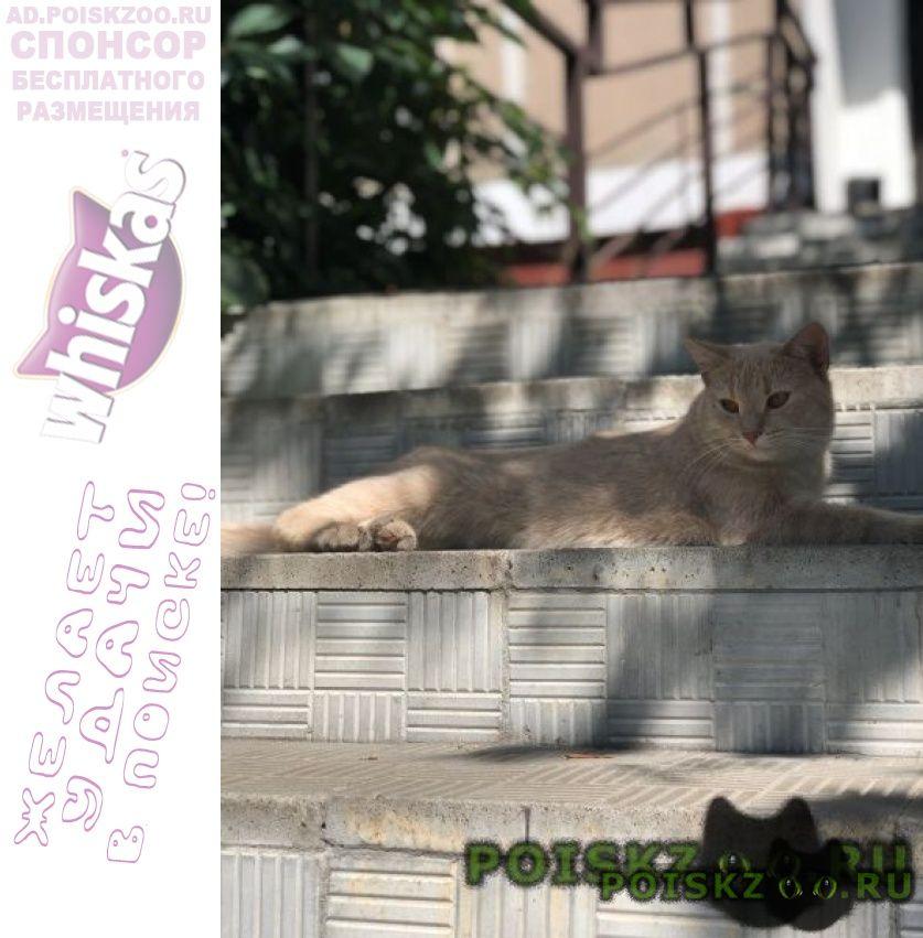 Найден кот кунцево, молодёжная г.Москва
