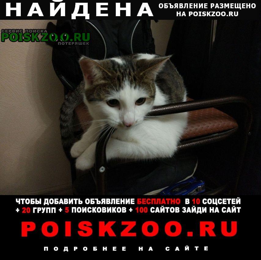 Найдена кошка 3-х цветная, домашняя Видное