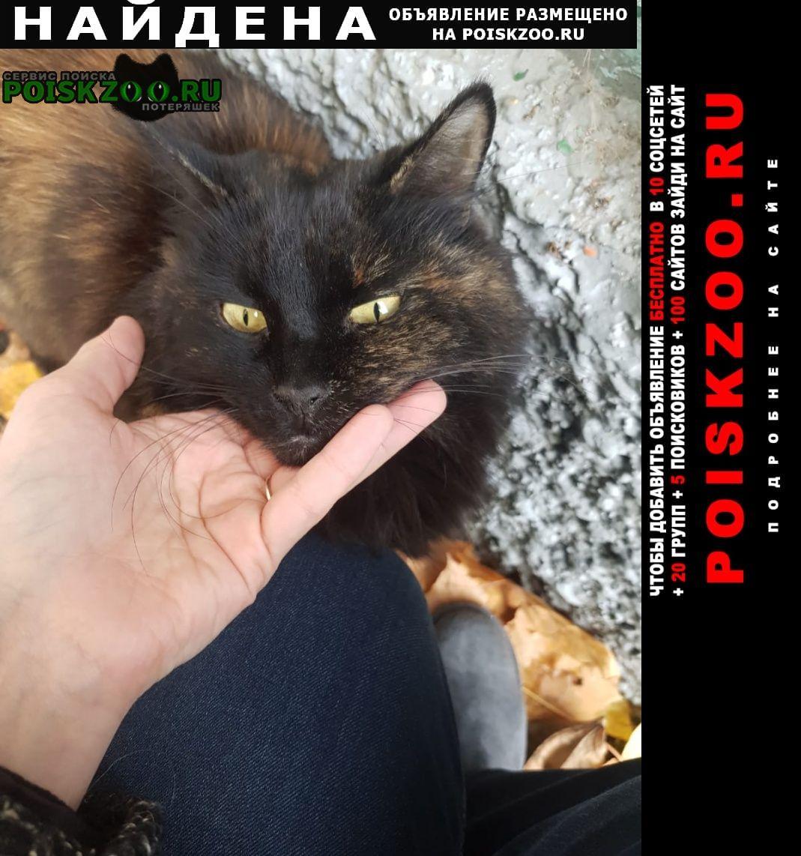 Найдена кошка черепахового окраса Москва