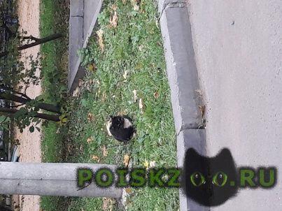 Найдена кошка кот или черный с белой грудкой г.Химки