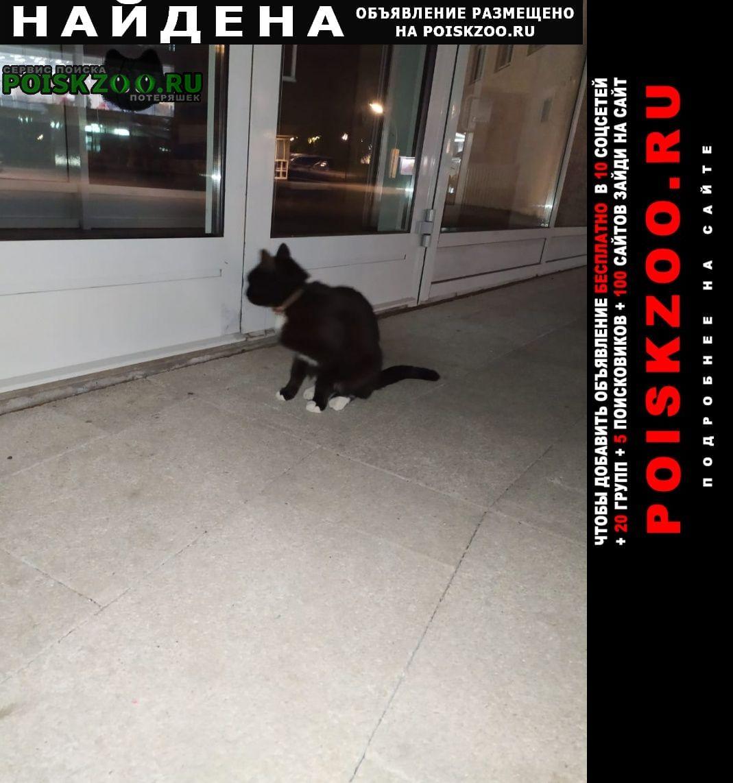 Найдена кошка чёрная, белые усы и носочки на лапках Москва