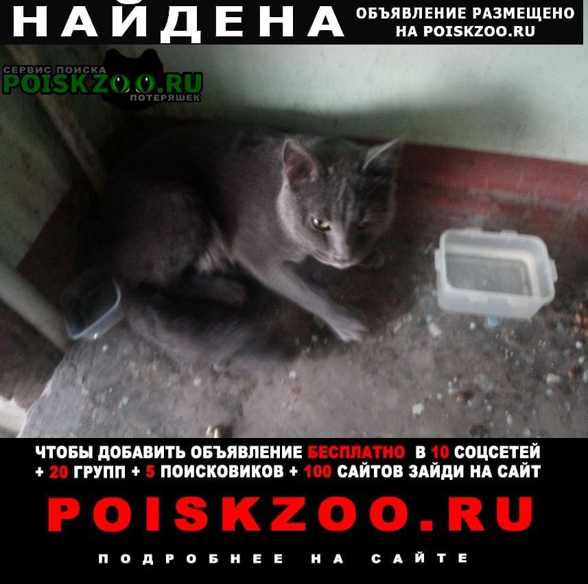 Найден кот русская голубая Красноярск