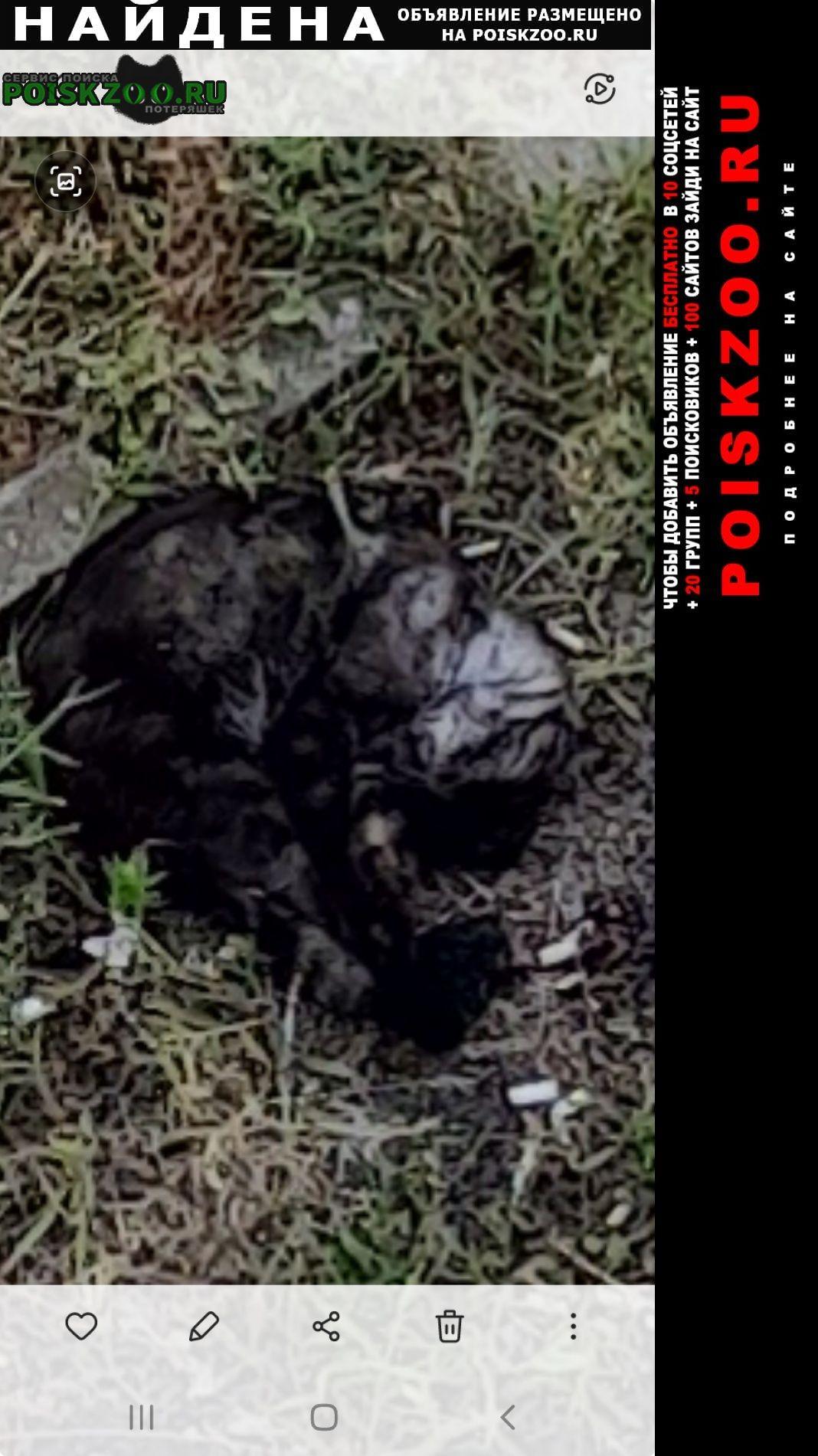 Найдена кошка замечен котик Гомель