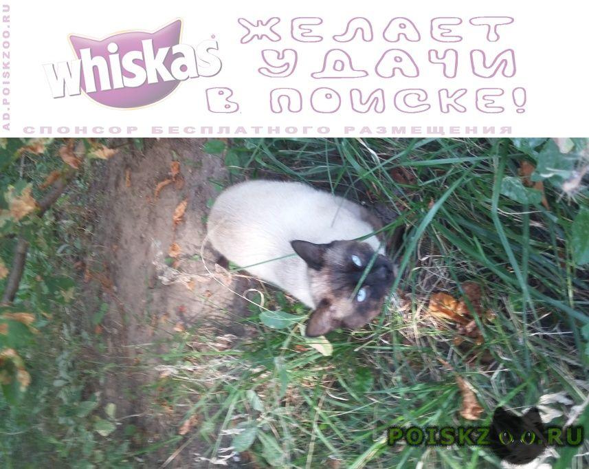 Найден кот похожий на сиамского сидит на улице г.Москва