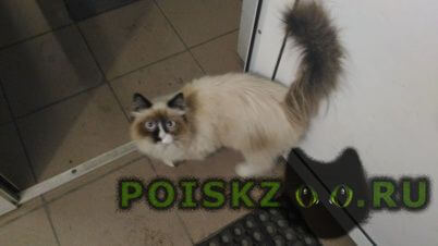 Найдена кошка г.Омск