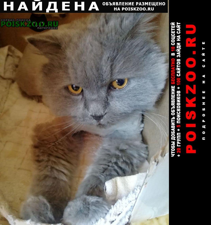 Зеленоград Найден кот британец