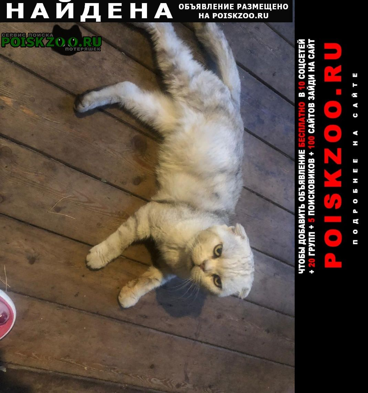Найдена кошка кот Раменское