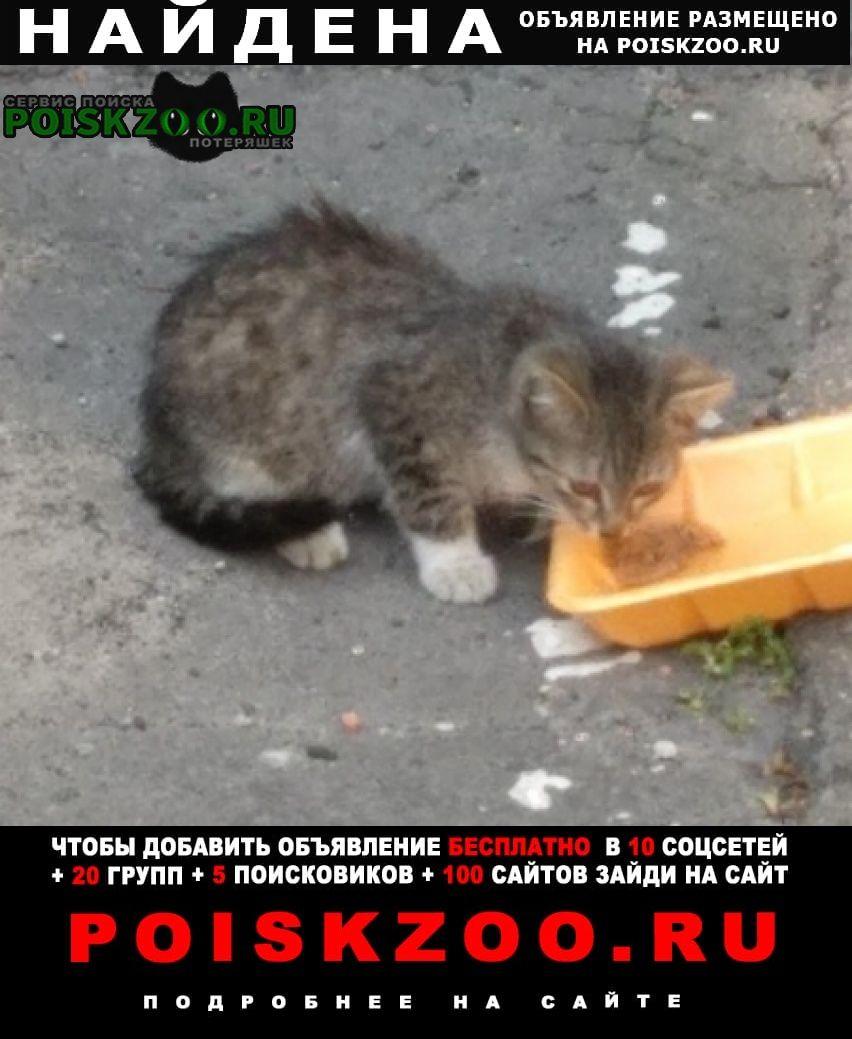 Найдена кошка котёнок очень маленький, месяца 2-3 Москва