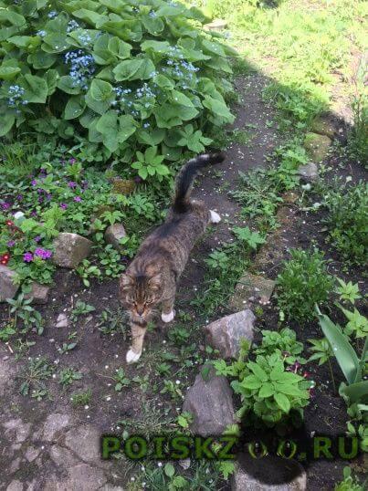 Найден кот г.Тверь
