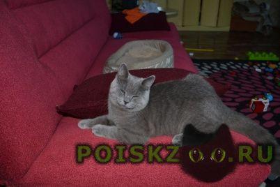 Найдена кошка срочно ищем добрые руки г.Нижний Новгород