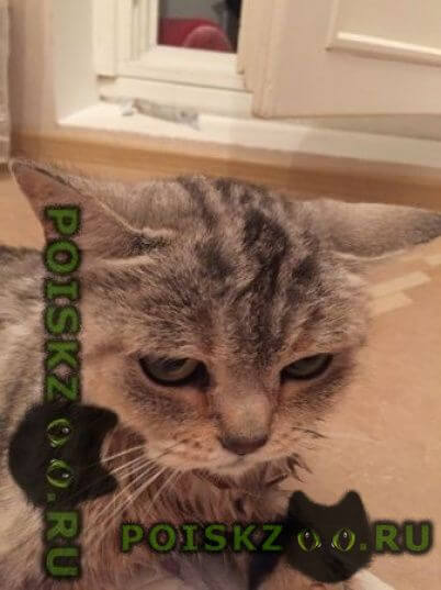 Найдена кошка г.Москва