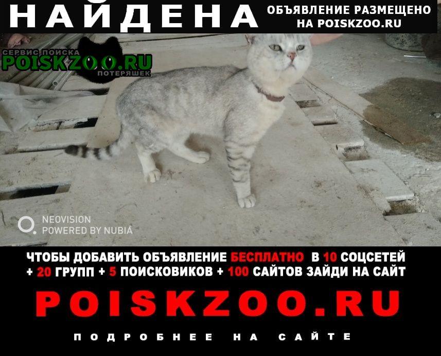 Найден кот серый Арзамас