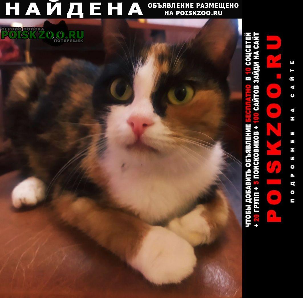 Балашиха Найдена кошка девочка подросток