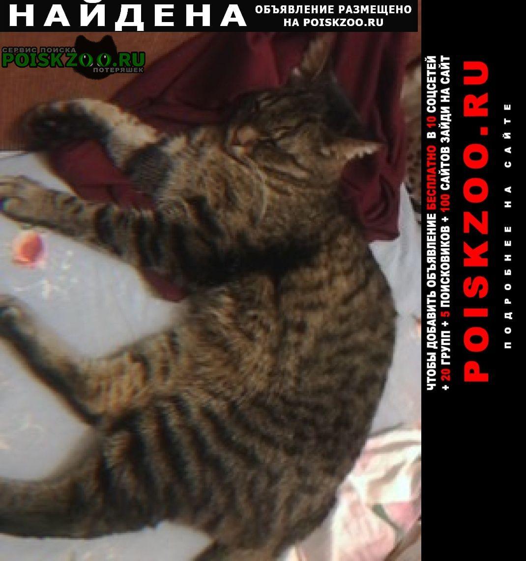 Найден кот в марьино Москва