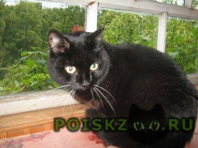 Найден кот стерилизованный черный г.Красноярск