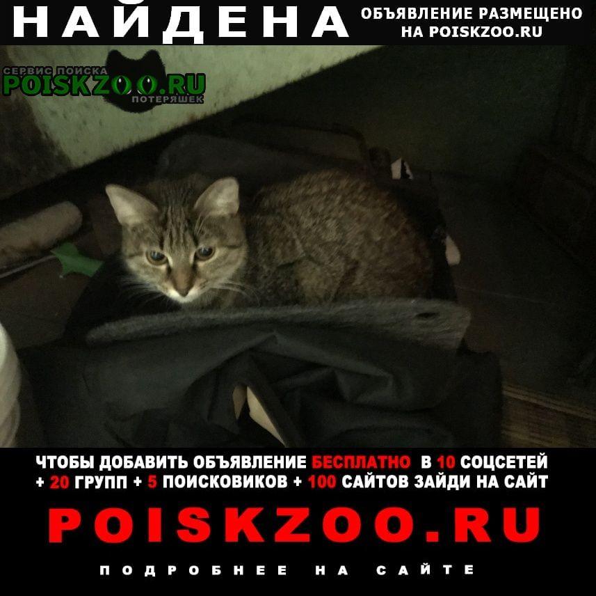 Найдена кошка 10.12 прибилась. зашла в под'езд. Москва