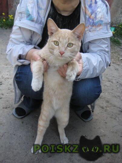 Найден кот г.Тамбов